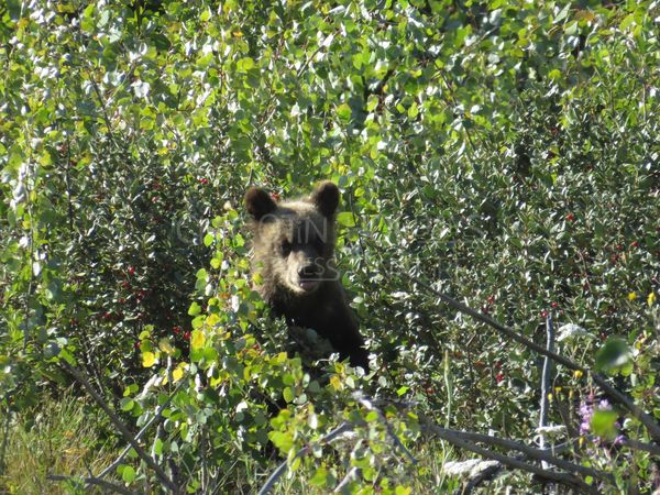 It's a Bear-y Good Day to View the Bears