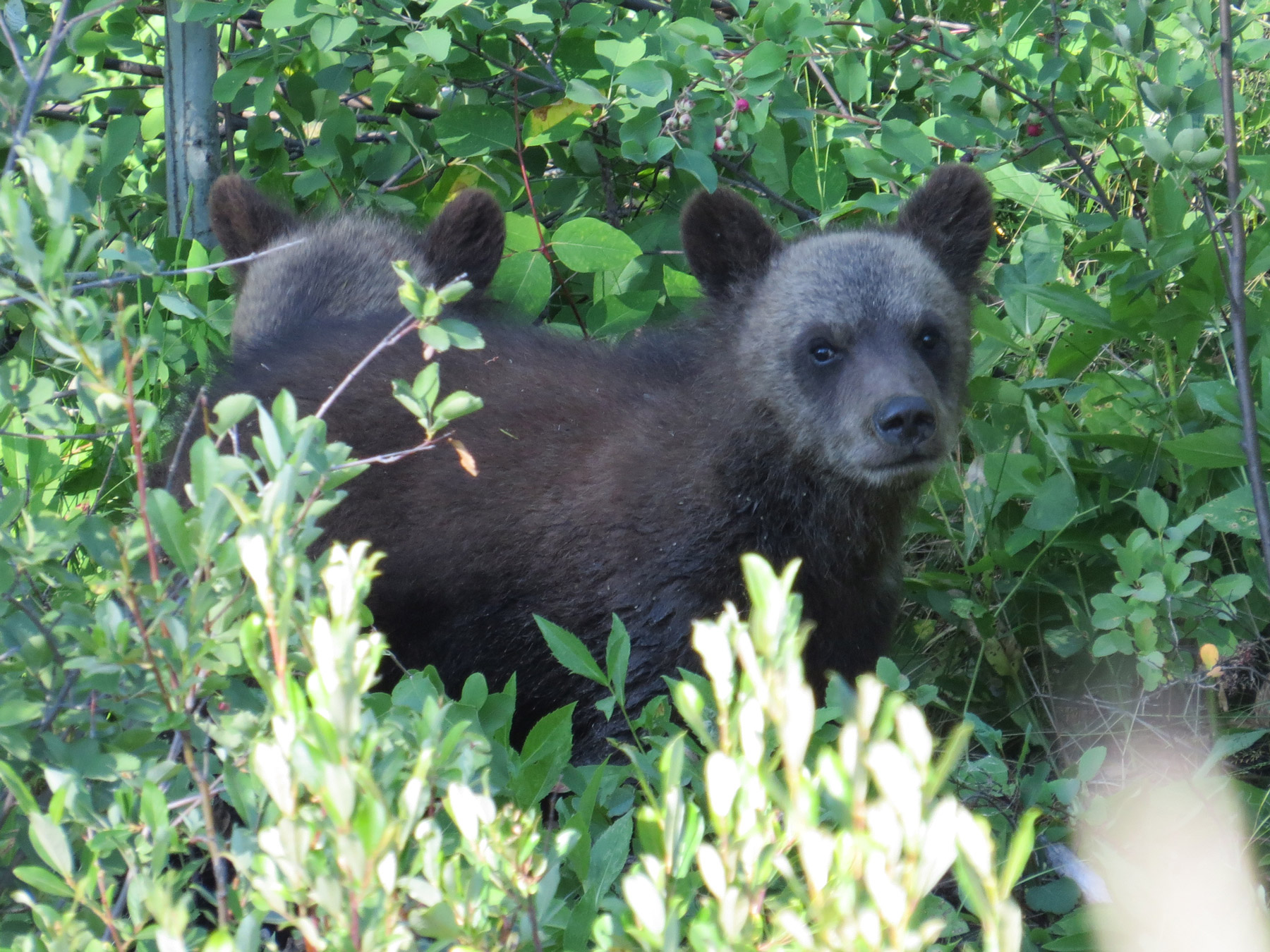 Wildlife viewing adventures with Chilcotin Holidays