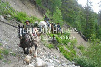 BC Backcountry Horseman Pack Horse Trip Donation