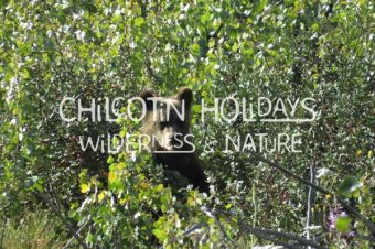 South Chilcotin Safari