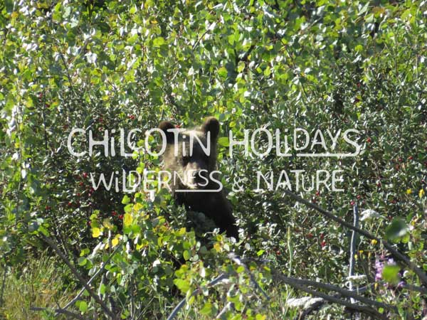 South Chilcotin Safari