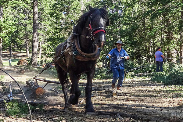 Horse Logging Course