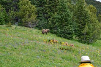 The Bear Viewing adventure with Chilcotin Holidays